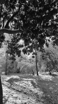 January Snow Storm - 2