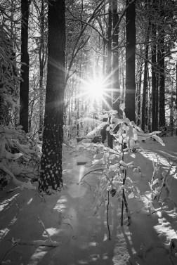 January Snow Storm - 1