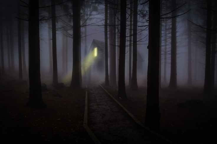 foggy-mist-forest-trees-42263.jpeg