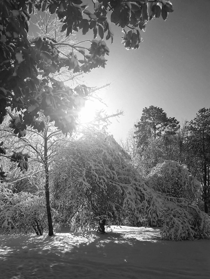 Raleigh Snow 2018 Black and White