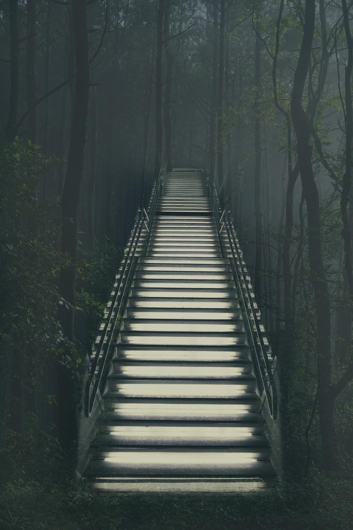 stair woods.jpg