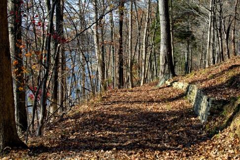 Woods One