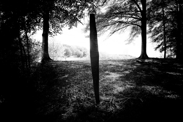 Art in the Woods Black and White.jpg
