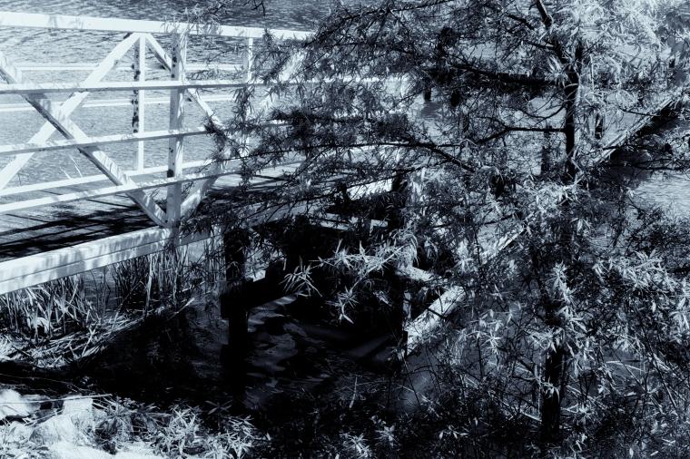 White Dock Black and White.jpg