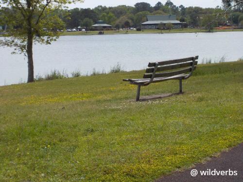 Bench by lake