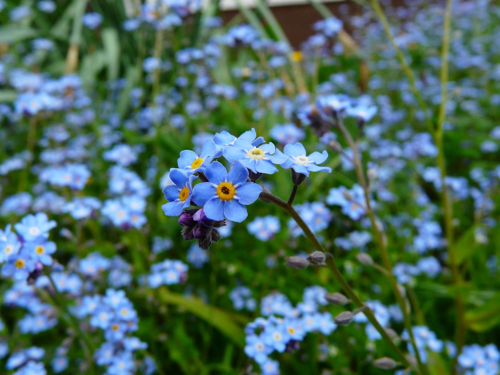 nature blue meadow plant