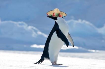 penguin in a sombrero